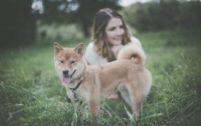 Entscheidung Hund – welche Fragen sollte man sich im Vorfeld stellen?